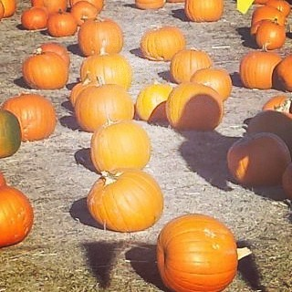 Were talking local pumpkinpatch locations ontheblogtoday! Check it out! Coloradohellip