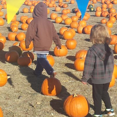 Pumpkin Patches Near Colorado Springs